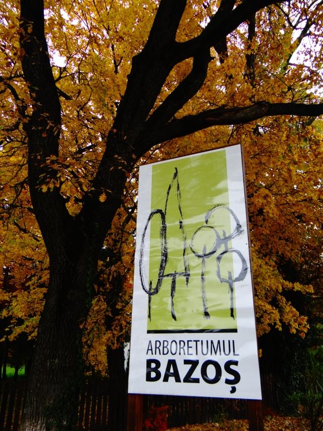 bazosul-nou-timis-parc-plimbare
