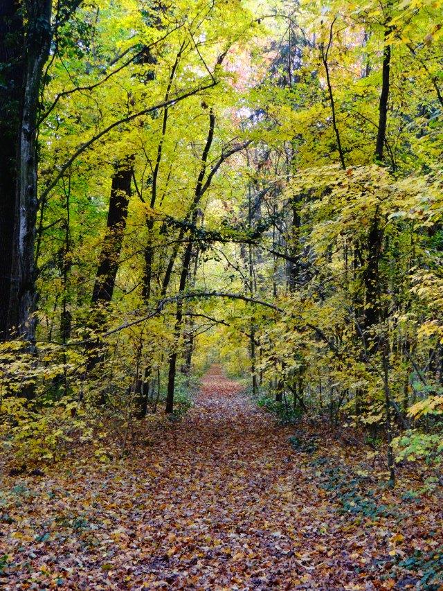 gradina-botanica-parc-dendrologic-bazos
