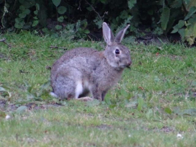 bruges-iepuri-parc